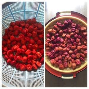 土用干し&庭の野菜