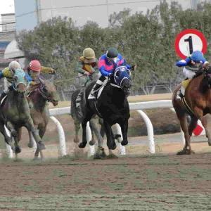 【函館スプリントステークス 2020予想】追い切り・ラップ適性・レース傾向考察 & 各馬評価まとめ / 答えはシンプル 人気馬はそう簡単にいかない? ならば……