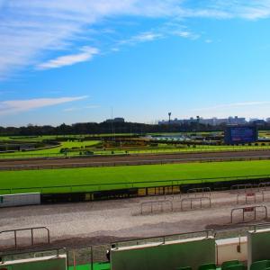 【日本ダービー (東京優駿) 2020予想】追い切り・ラップ適性・レース傾向考察 & 各馬評価まとめ / Overcame〜本命◎ 対抗◯ まさかの・・・?