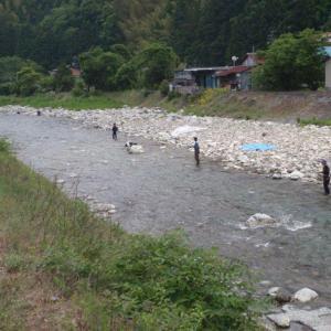 稚アユ、急流をジャンプ 静岡・興津川で遡上本格化