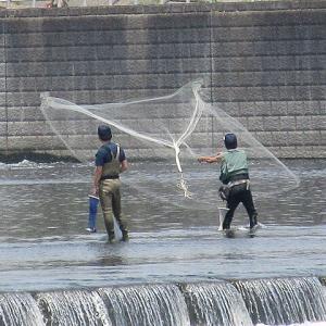 調布・多摩川でアユの投網体験 川漁師が直接指導、「今年のサイズは抜群」