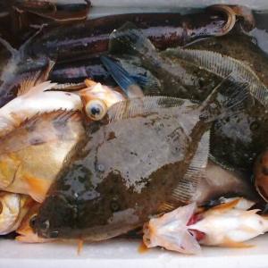 秋は『イカダ五目釣り』が楽しい季節 家族釣行向けターゲット5選