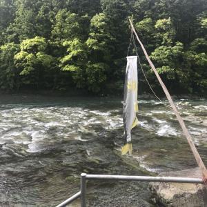 ♪今日は何の日?フッフ〜〜♪ここは〜古座川滝の拝♪