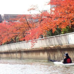 東京水路カヤックツアー(紅葉シーズン)