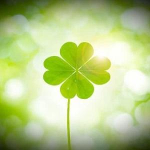 【雑踏の閃き】幸せに感謝すれば運の方から