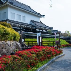 2019年新緑の京都・勝竜寺城公園の壁紙(計27枚)
