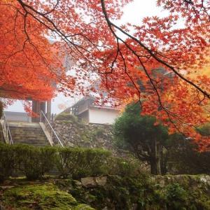 丹波~舞鶴の紅葉