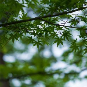 2019年新緑の京都・京都御苑の壁紙その3(計33枚)