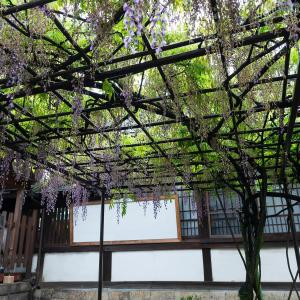 2019年新緑の京都・六孫王神社の壁紙(計12枚)