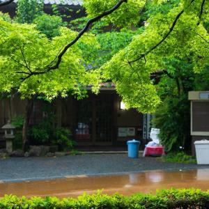 2019年新緑の京都・円山公園の壁紙(計39枚)