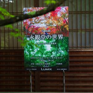 2019年新緑の京都・永観堂の壁紙(計99枚)