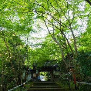 2019年新緑の京都・山科聖天の壁紙(計10枚)