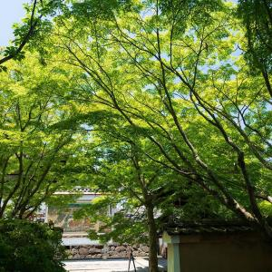 2019年新緑の京都・酬恩庵の壁紙(計35枚)