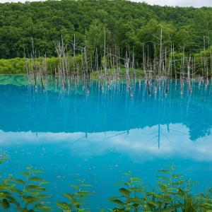 美瑛・青い池の壁紙その1(計13枚)