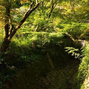 2019年紅葉の京都・神蔵寺の壁紙(計32枚)