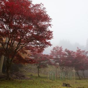 2019年紅葉の京都・玉雲寺の壁紙(計14枚)