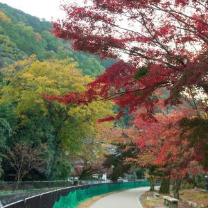 2019年紅葉の京都・山科疎水の壁紙(計23枚)
