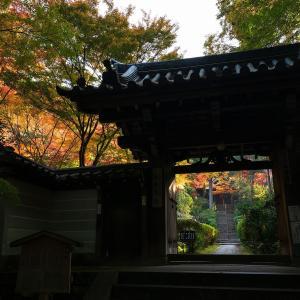 2019年紅葉の京都・来迎院(泉涌寺)の壁紙その1(計18枚)