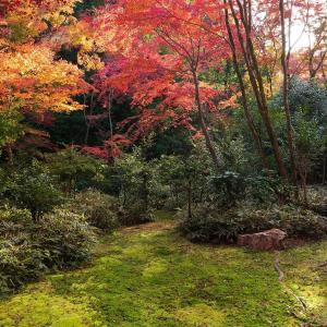 2019年紅葉の京都・来迎院(泉涌寺)の壁紙その2(計21枚)