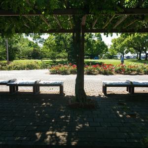尼崎農業公園(計33枚)