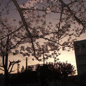 2002年春の風景の壁紙(計6枚)