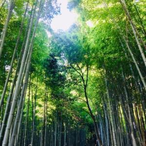 2019初夏の京都の新緑へ☆嵐山編