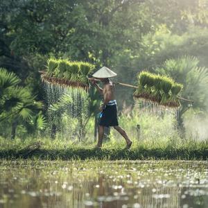 そろそろ梅雨入りです。田植えの季節です。
