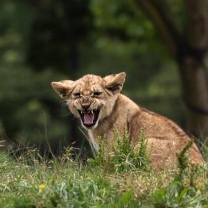 日本の野生動物が町に出没して何かと被害が出ています、私も襲われました!