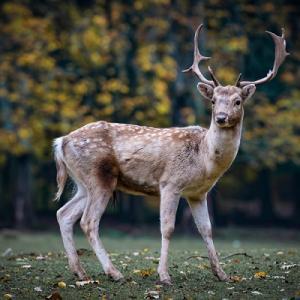 実家近くの野生動物の生態系が変わって来ています。