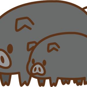 養豚場で豚熱が出てその養豚場の豚全部290頭が殺処分になりました。