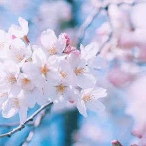 立春!令和2年新たなスタート! 【私は何者か?】