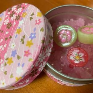 六義園の桜 ~DNAアクティベーションに~