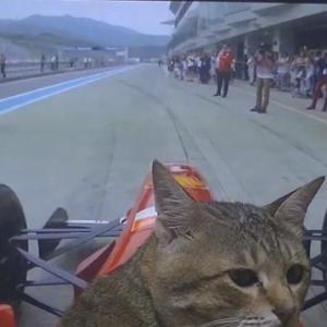初めてF1マシンを運転するアイルトン・セニャ(猫)がかわいい ほか