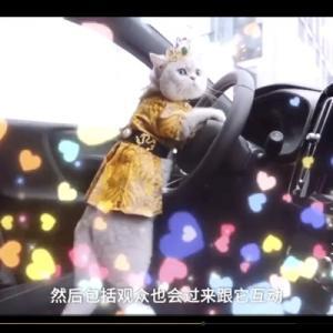 モーターショーのアイドル猫マオマオがふわっふわで可愛すぎる