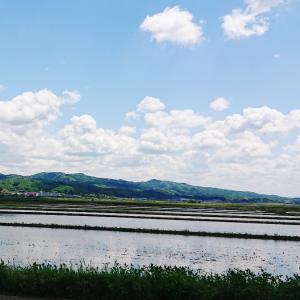 米どころの風景