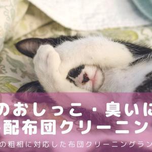 猫のおしっこ・臭いをとる布団クリーニングはここがおすすめランキング!ペットの粗相に