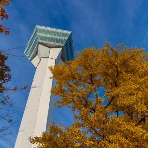 タワーの足下が黄色くなっていた 【五稜郭公園】