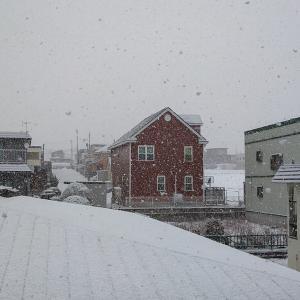 22日の写真 【もどきの丘 七飯町役場前】