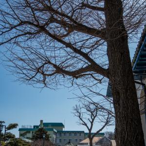 フェリーターミナル 危ない 危ない【函館山の麓】