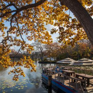 大沼公園の紅葉  2020.10.31