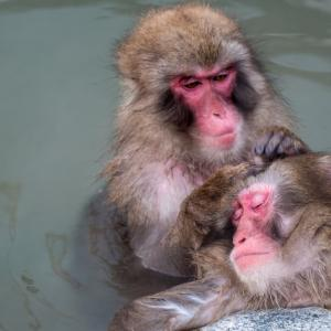 サル温泉は冬の風物詩