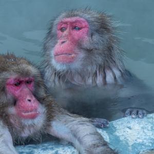 サル さる 猿