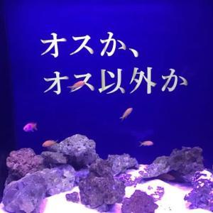 「君臣水魚の交わり」