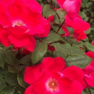 「花が咲く場所には希望も咲く」