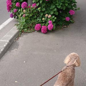 お花を楽しみながら朝散歩