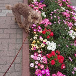 札幌ファクトリーのお花畑