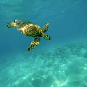 次回ハワイ旅行の計画