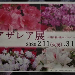 札幌・百合が原緑のセンターでアザレア展が開催中です。