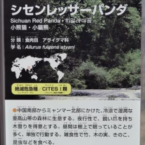 シセンレッサーパンダ(札幌市円山動物園)