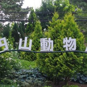札幌円山動物園のリスザルさんをどうぞ!